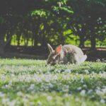 Comment  Fabriquer un piège à collet pour lapins