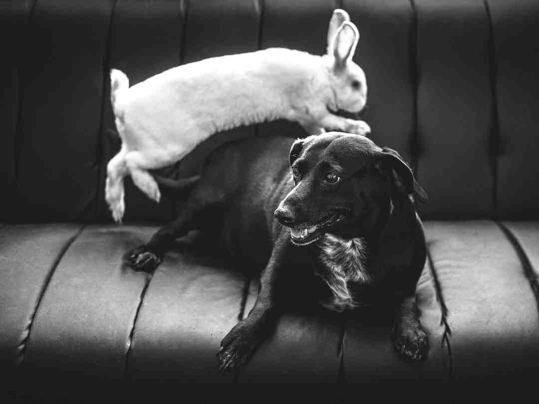 Comment attirer les lapins de garenne ?