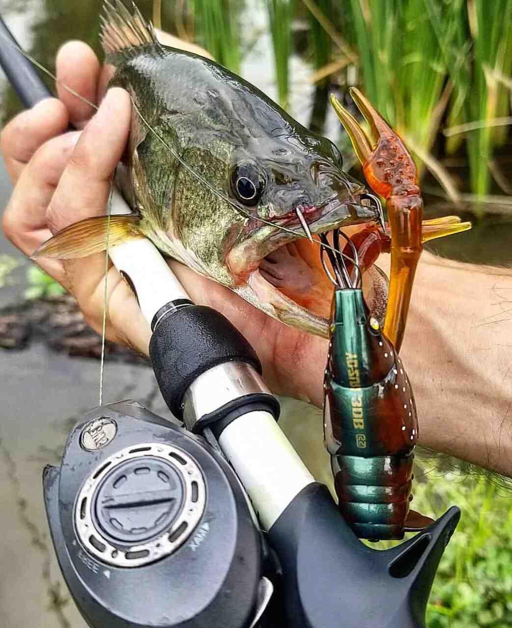 Où et comment pêche Les écrevisse ?