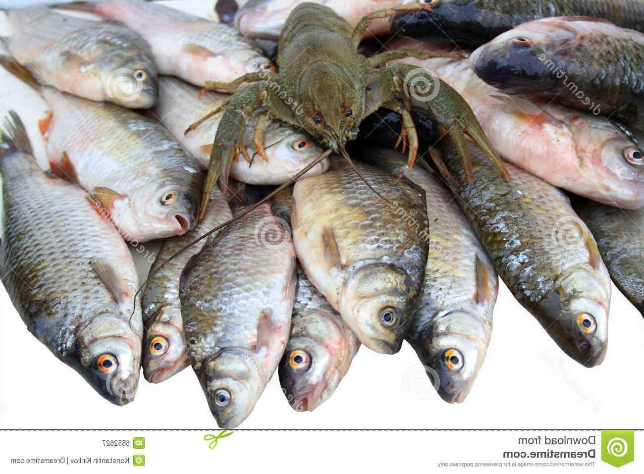 Quand pêcher l'écrevisse américaine ?